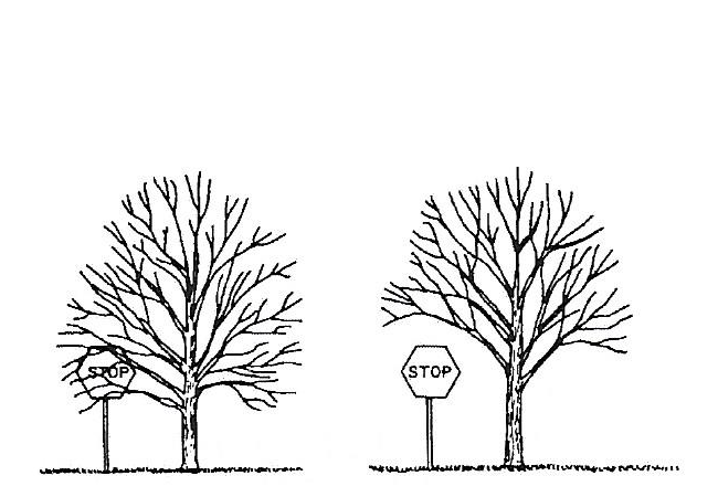 Illustration of tree crown lifting